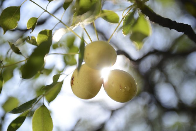 why-we-should-all-be-using-marula-oil